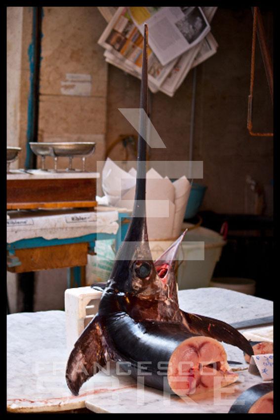 galleria-291-est-francesco-scire-ballaro_07