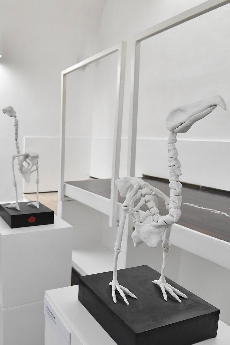 anatomie_forzate_angelo_gallo_galleria291_08