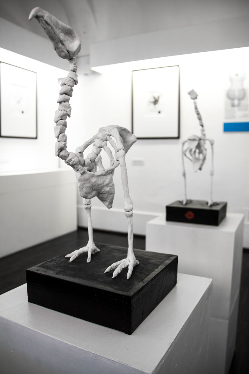 anatomie_forzate_angelo_gallo_galleria291_17